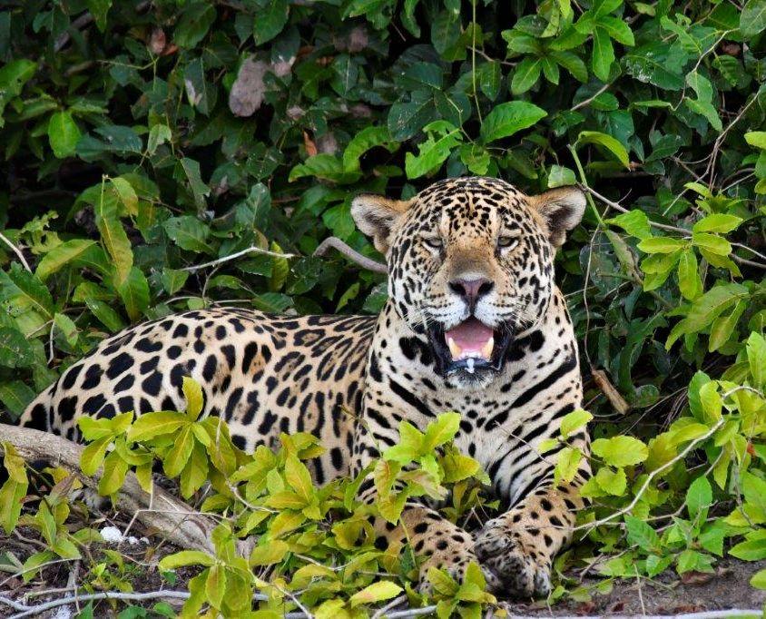 Colgate – Pantanal